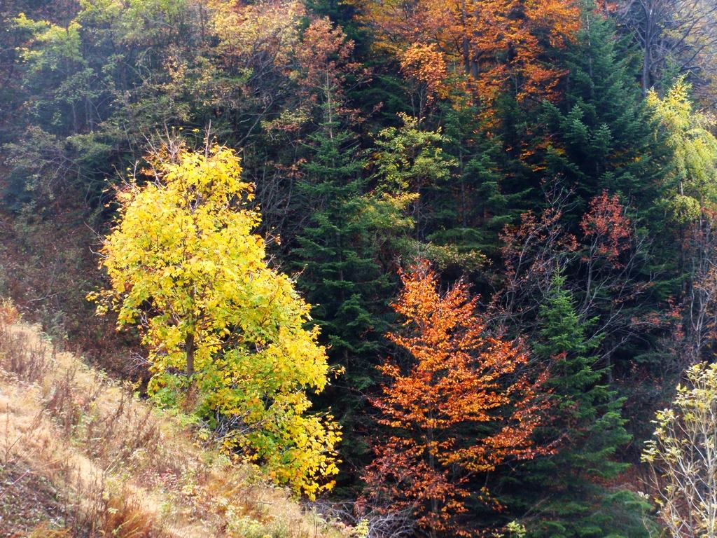 autunno valsesiano