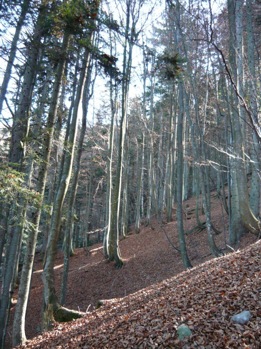 colori d'autunno nel bosco