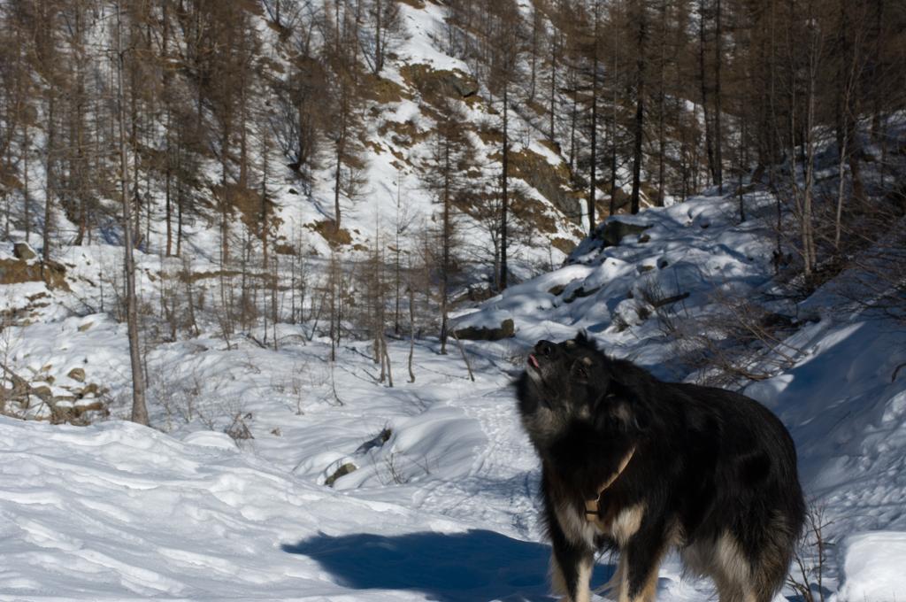 Camminare nella neve Valsesia Val Vogna