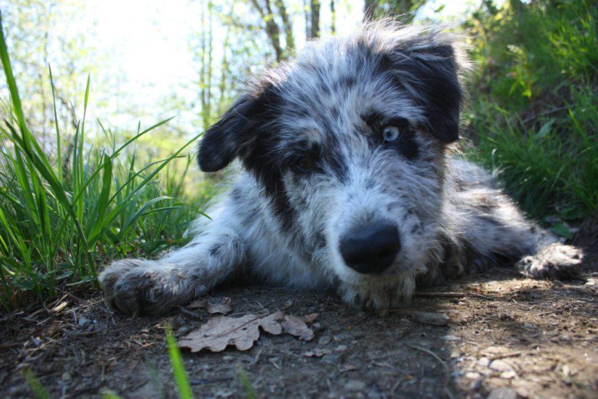 Passeggiata con cani in Valsesia